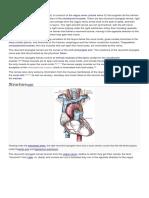 Recurrent Laryngeal Nerbe