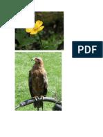 ESTEPA Flora y Fauna