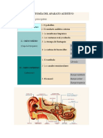 Anatomía Del