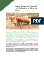 Estudio Boliviano Encuentra Potencial Exportador a La Calidad de La Carne de Bovinos Criollos