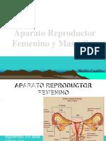 Aparatoreproductor 151122032021 Lva1 App6891