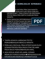 DASAR-DASAR BIOMOLEKULER REPRODUKSI PRIA.pptx