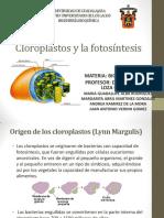 Fotosintesis Biologia Celular