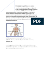 Anatomia y Fisiologia Del Sistema Endocrino