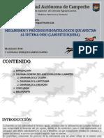 Campos- Fisiopatología Vet- Laminitis Equina