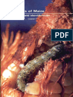 Insect Pests of Maize