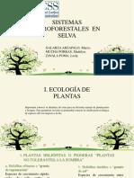 Sistemas Agroforestales Selva