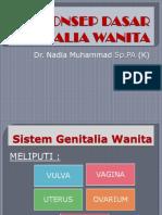 10. Genitalia Wanita Kuliah