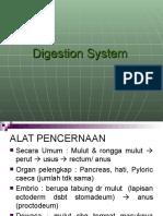 Sistem Pencernaan New