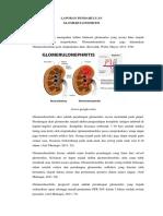LP Glomerulonefritis