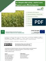 Características de Sinapis Alba Subsp. Mairei Como Cubierta Vegetal