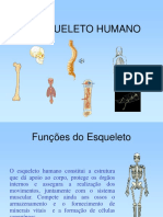 Esqueleto Human o