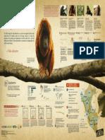 Infografía Primates