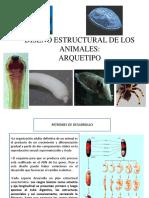 Diseño Estructural de Los Animales