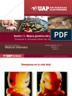 Unidad IV 11 - Mejora genética del ganado porcino.pdf