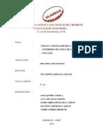 Informe de Cantera de Cascajal Ensayos