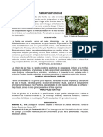Passiflora-selene Nuevo Familia