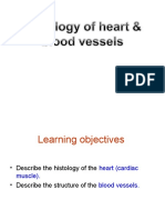 18 - Histology of Heart and Blood Vessels