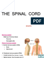 19 - The Spinal Cord