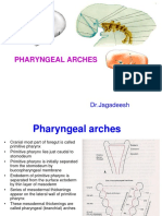 21 - Pharyngeal Arches (HD)