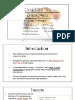 4B8 Drosophila