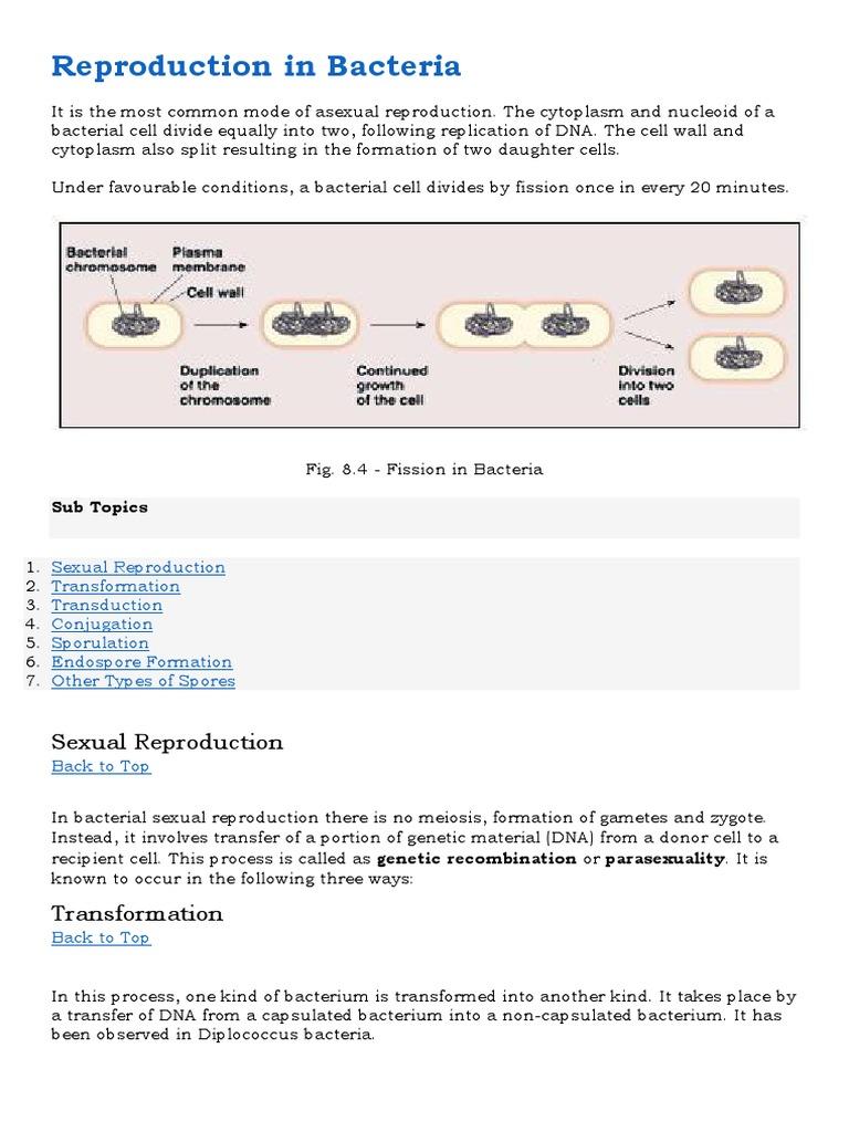 Asexual reproduction bacteria called clostridium