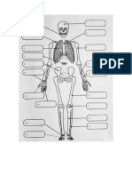 Esqueleto y craneo mudo.docx