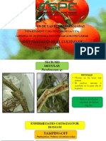 Exposicion de Enfermedades Del Tomate (1)
