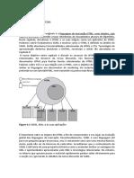 Asp.Net framework (parte II)