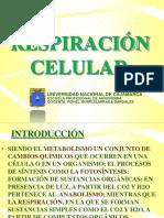 Respiracion Celular Agro