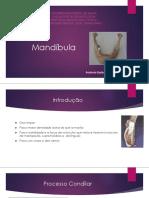 Mandíbula - andreia e moises.pdf