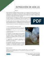 69 Extraccion de ADN (Procedimiento Basico)