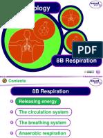 8B Respiration