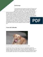 Origem e História Da Raça Labrador