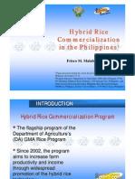 Hybrid Rice Philippines 2