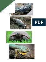 Imagenes de Anfibios