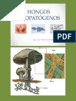 HONGOS FITOPATOGENOS.pdf