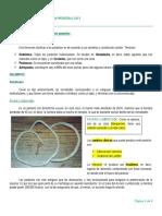 Clase 2- Nemátodes (1).docx
