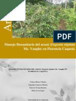 Manejo Fitosanitario Del Arazá