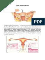 aparato-reproductor-femenino1