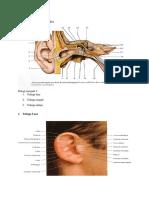 Laporan Anatomi Histologi Fisiologi Ray Modul 2 SS