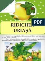 Ridichea uriasa.pps