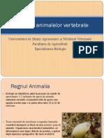 Evoluția Animalelor Vertebrate