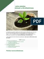 Diferencias Entre Plantas Monocotiledóneas y Dicotiledóneas