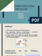 Anatomofisiología Reflejos