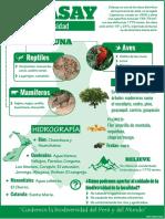 Infografía Colasay