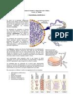 Guía Material Genético, Ciclo Celular, Mistosis y Meiosis