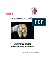 Guia Practicas Neuro