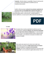 Estas 12 Plantas Ahuyentan a Los Mosquitos LUPE