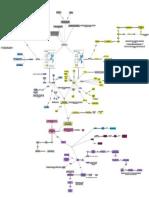 6. Moléculas Do Complexo Principal de Histocompatibilidade e Apresentação de Antígenos Aos Linfócitos T